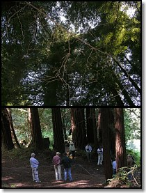 Redwood Forest Test Site