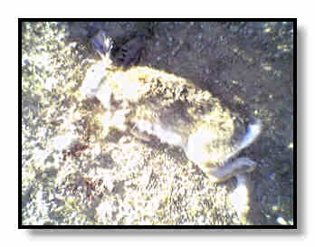 Rabbit #2 taken at 25 yards